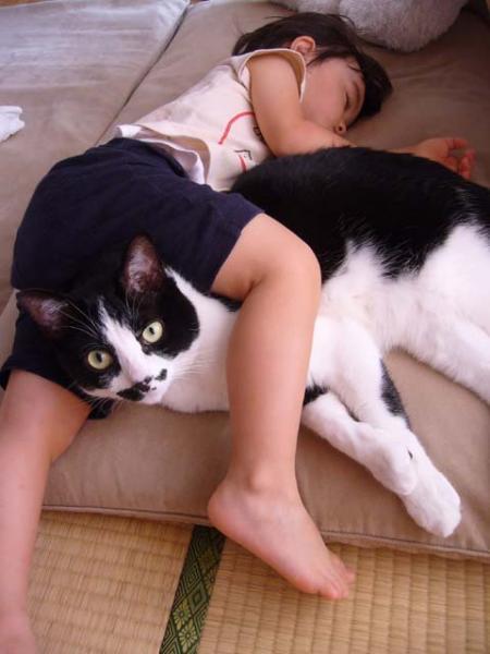 愛らしい,可愛い,動物画像,まとめ083