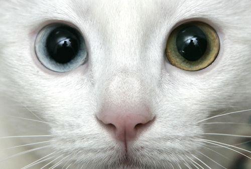 愛らしい,可愛い,動物画像,まとめ134