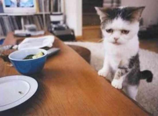 可愛すぎる,変顔,猫,画像,まとめ001