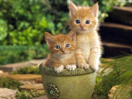 可愛すぎる,猫,画像,貼っていく001