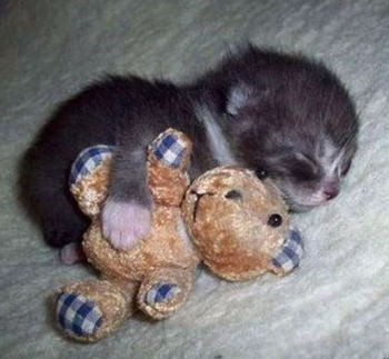 おやすみ,ネコ,画像,まとめ001