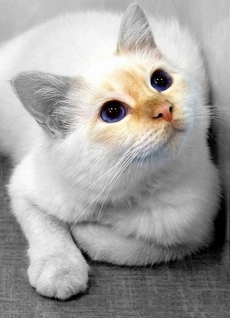 これは可愛い,癒し,ネコ,画像,まとめ002