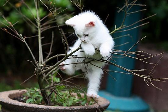 癒され過ぎる,子猫,画像,まとめ002