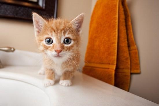 癒され過ぎる,子猫,画像,まとめ004