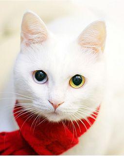 これは可愛い,癒し,ネコ,画像,まとめ005