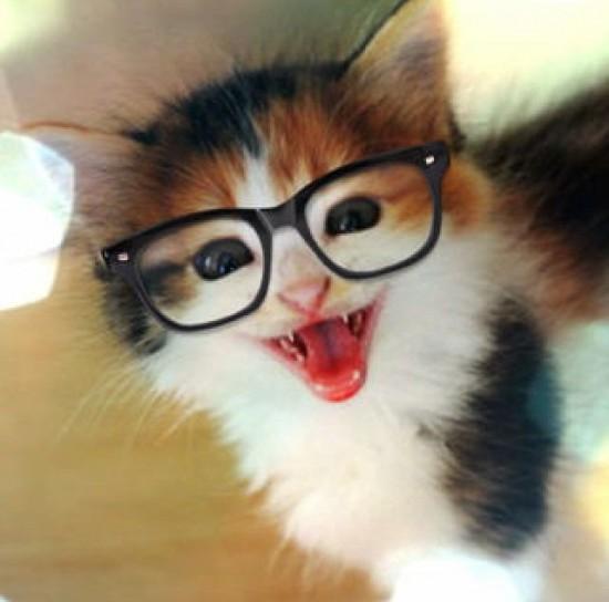 可愛すぎる,猫,画像,貼っていく005