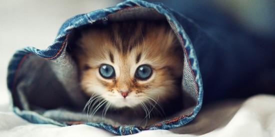 可愛すぎる,猫,画像,貼っていく006