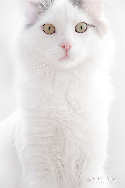 これは可愛い,癒し,ネコ,画像,まとめ007