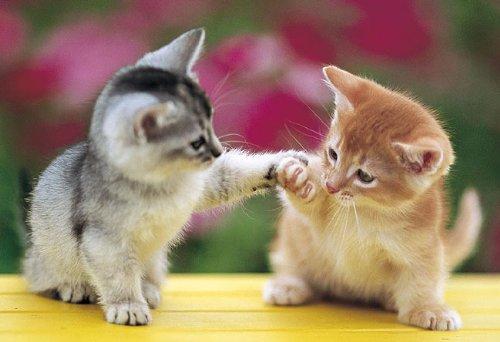 可愛すぎる,猫,画像,貼っていく007