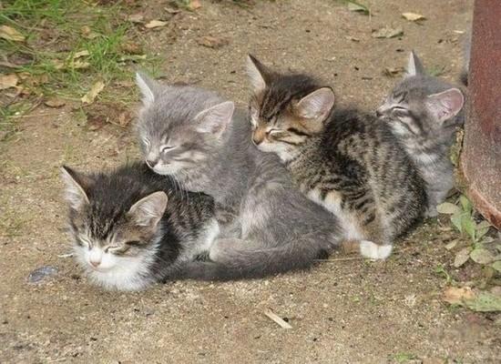 癒され過ぎる,子猫,画像,まとめ007