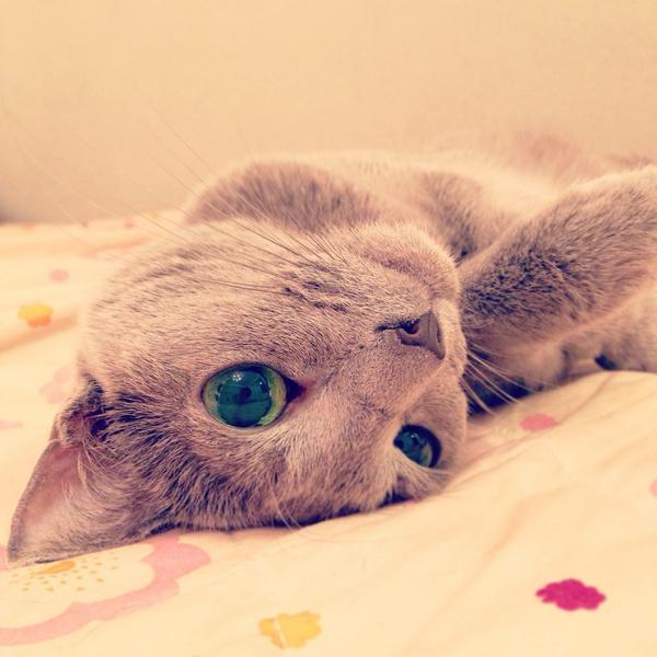 ぐーだら,可愛い,猫,画像,まとめ008