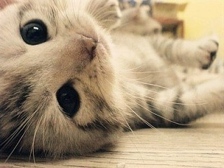 可愛すぎる,猫,画像,貼っていく009