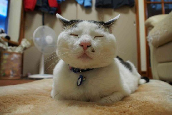 可愛すぎる,変顔,猫,画像,まとめ010