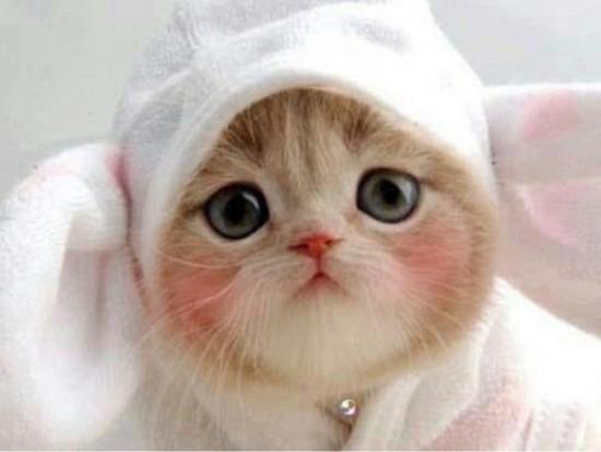 可愛すぎる,猫,画像,貼っていく010