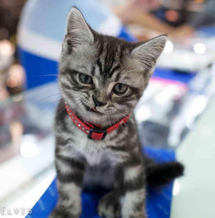 可愛すぎる,変顔,猫,画像,まとめ011