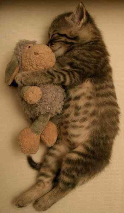 ぐーだら,可愛い,猫,画像,まとめ012
