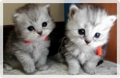 可愛すぎる,猫,画像,貼っていく013