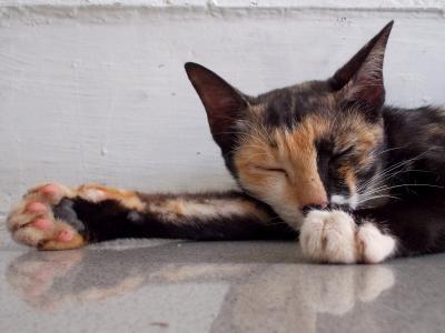 ぐーだら,可愛い,猫,画像,まとめ013