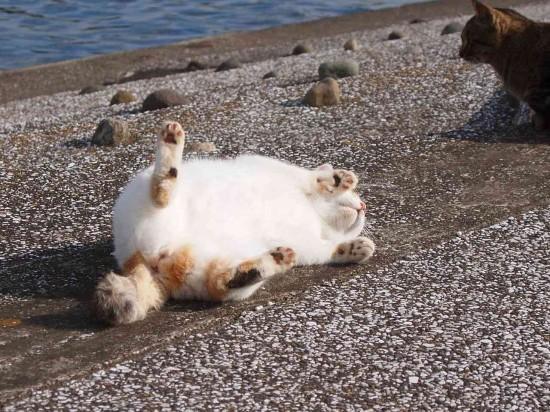 ぐーだら,可愛い,猫,画像,まとめ014
