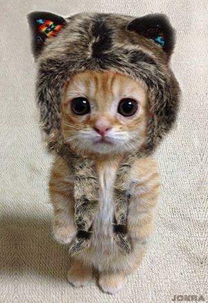 可愛すぎる,猫,画像,貼っていく015