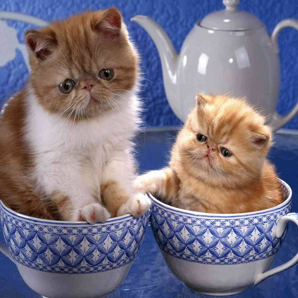 可愛すぎる,変顔,猫,画像,まとめ016