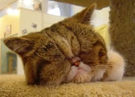 可愛すぎる,変顔,猫,画像,まとめ017