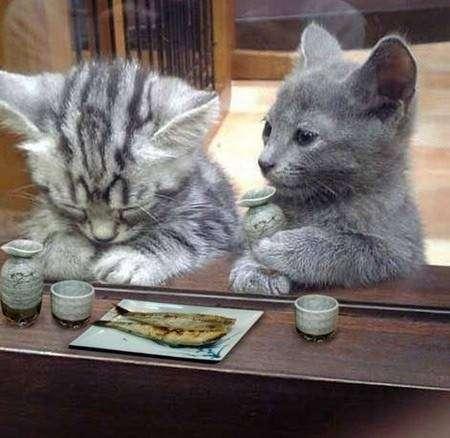 可愛すぎる,猫,画像,貼っていく018