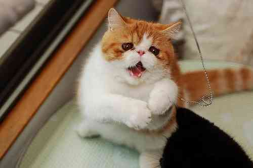 可愛すぎる,変顔,猫,画像,まとめ018