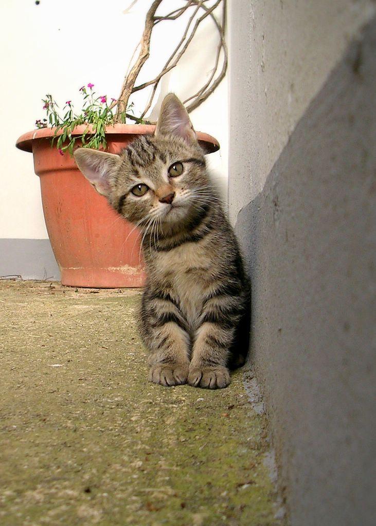 癒され過ぎる,子猫,画像,まとめ018