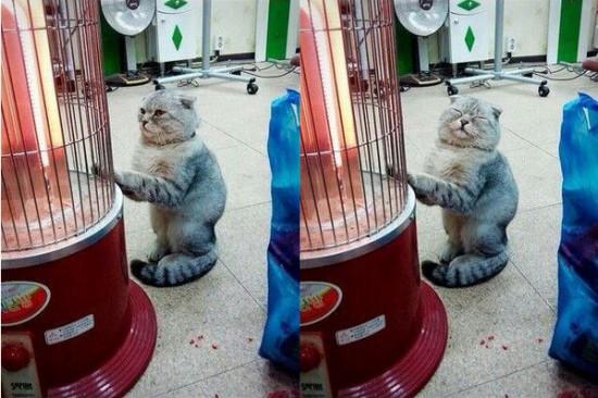 猫,可愛すぎる,ネコ,画像,まとめ018