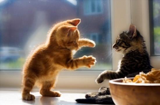癒され過ぎる,子猫,画像,まとめ019