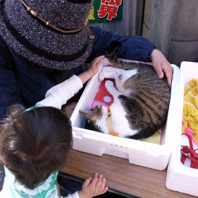 猫,可愛すぎる,ネコ,画像,まとめ020