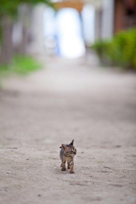これは可愛い,癒し,ネコ,画像,まとめ022