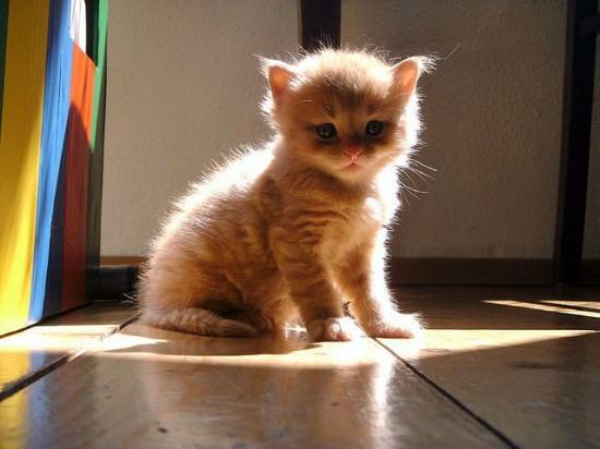 癒され過ぎる,子猫,画像,まとめ023