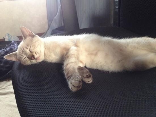 猫,可愛すぎる,ネコ,画像,まとめ023
