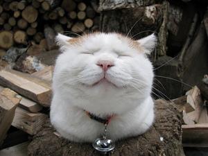 可愛すぎる,変顔,猫,画像,まとめ024