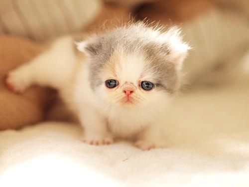 可愛すぎる,変顔,猫,画像,まとめ026