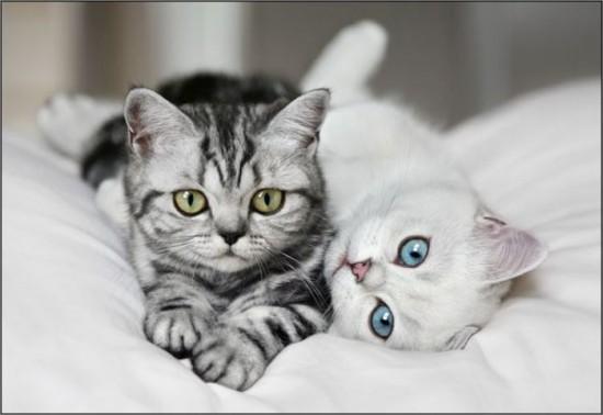 癒され過ぎる,子猫,画像,まとめ027