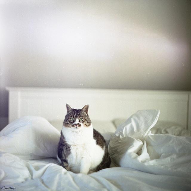これは可愛い,癒し,ネコ,画像,まとめ029