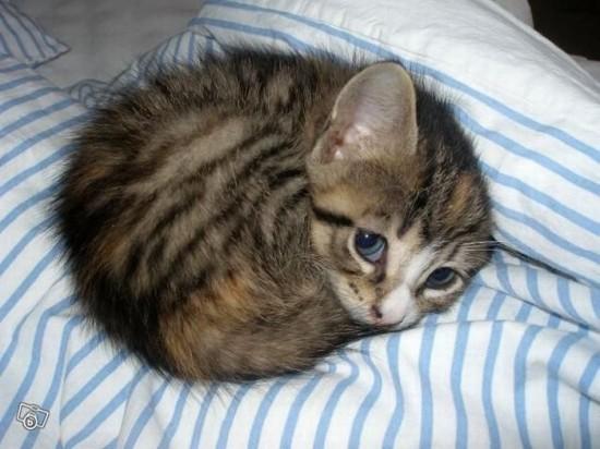 癒され過ぎる,子猫,画像,まとめ029