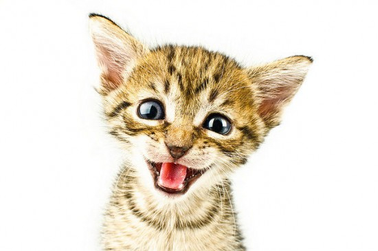 癒され過ぎる,子猫,画像,まとめ030
