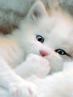 これは可愛い,癒し,ネコ,画像,まとめ031