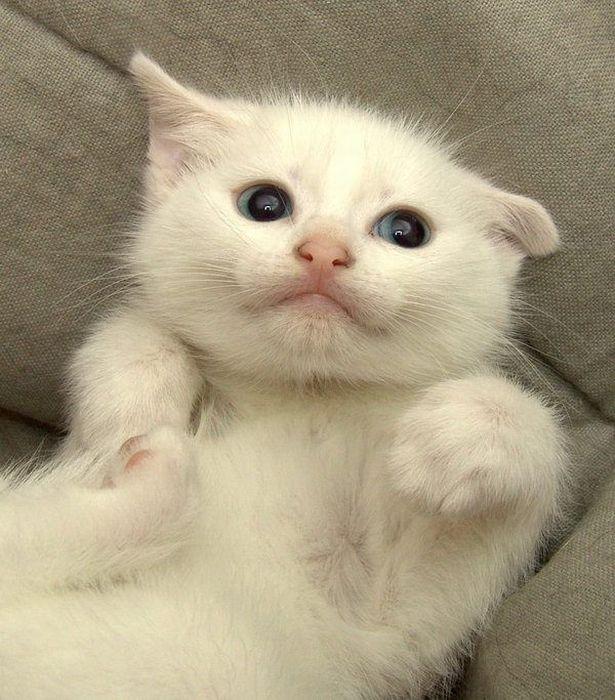 癒され過ぎる,子猫,画像,まとめ031
