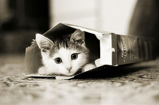 癒され過ぎる,子猫,画像,まとめ032