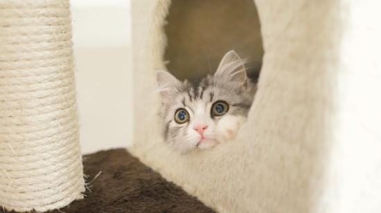 猫,可愛すぎる,ネコ,画像,まとめ033