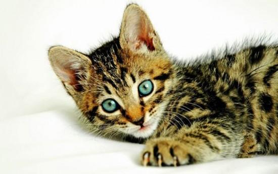 癒され過ぎる,子猫,画像,まとめ034