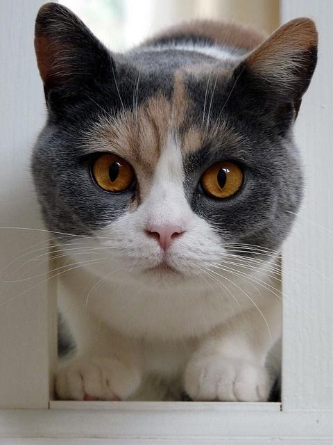 これは可愛い,癒し,ネコ,画像,まとめ037