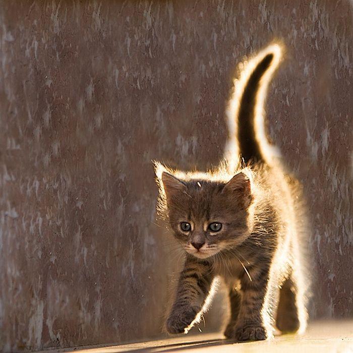 癒され過ぎる,子猫,画像,まとめ038