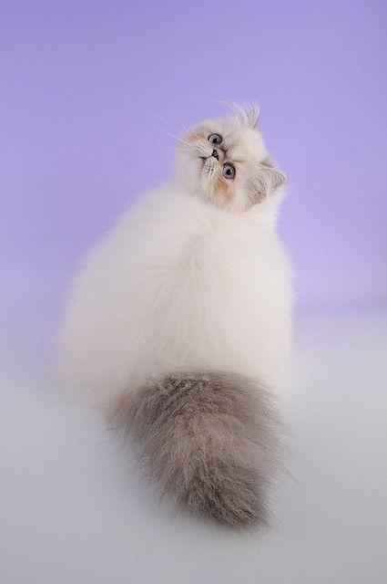 これは可愛い,癒し,ネコ,画像,まとめ039