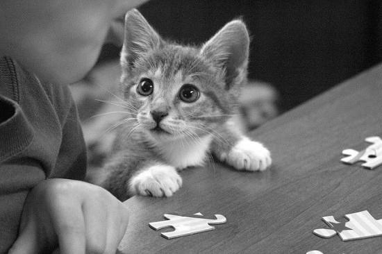 癒され過ぎる,子猫,画像,まとめ039